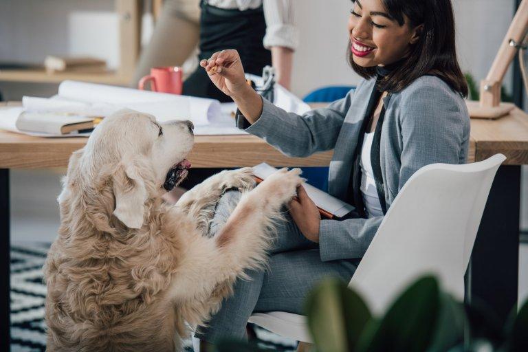 Executiva sorridente alimenta pets no trabalho.