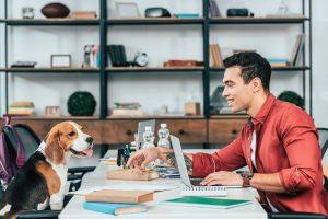 executivo observa cachorro sentado na cadeira à sua frente no ambiente de trabalho