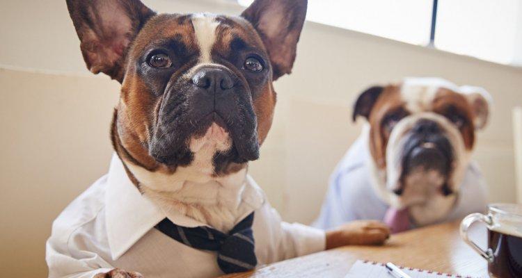 Dois cachorros dentro do ambiente corporativo